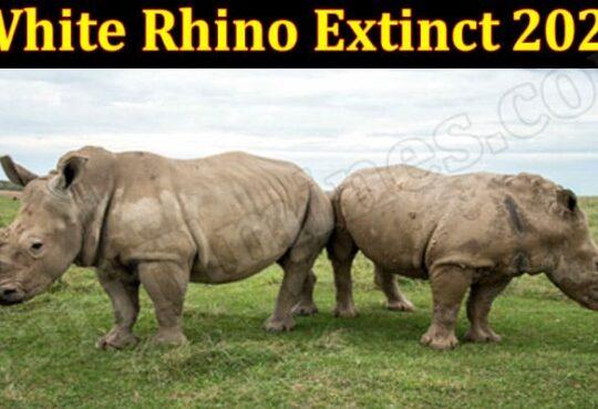 White Rhino Extinct 2021 (June) Get Deep Insight Here!