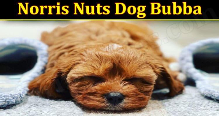 Laest News Norris Nuts Dog