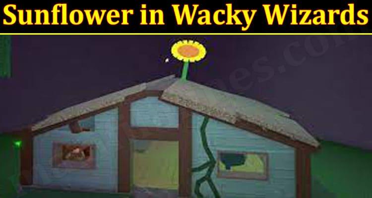 Latest News Sunflower In Wacky Wizards
