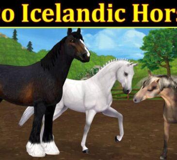 Gaming Tips Sso Icelandic Horse