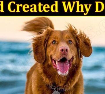 Latest News God Created Why Dogs