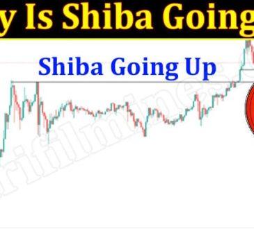 Latest News Shiba Going Up
